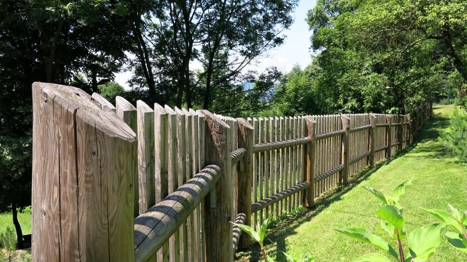 Modřínový plot